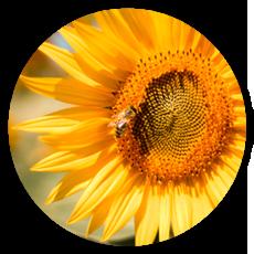 flower-home
